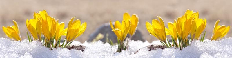 winterdienst-grau-und-grnpflege